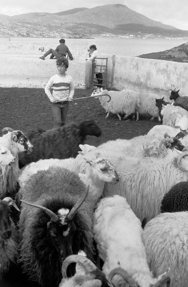 Sheep fank, 1985. © Paul Glazier 1985, all rights reserved.