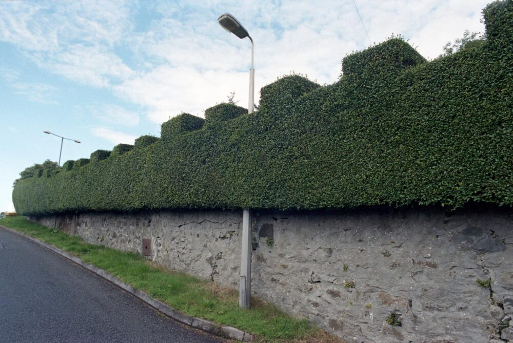 hedges_pole1