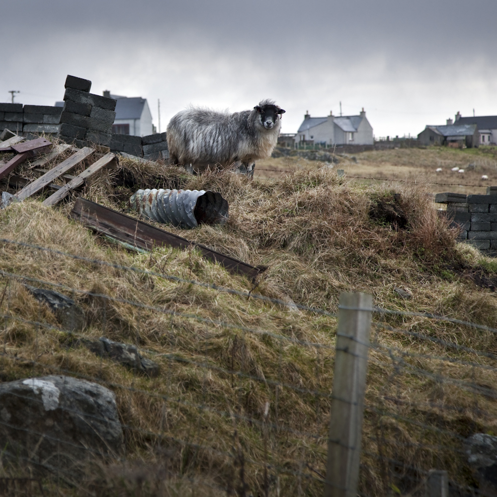 Sentinel (Carloway, Lewis, 2009), ©Robin MItchell, All rights reserved.